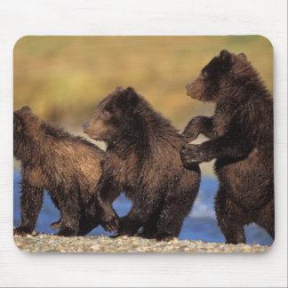 brown bear, Ursus arctos, grizzly bear, Ursus Mouse Pad