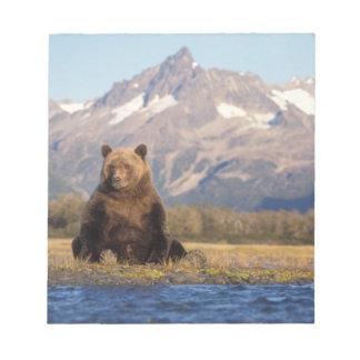 brown bear, Ursus arctos, grizzly bear, Ursus Notepad