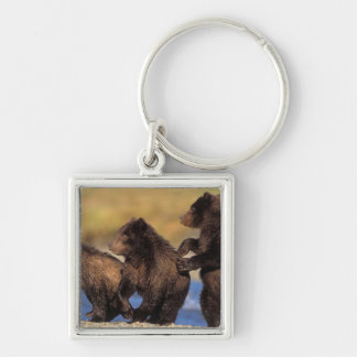 brown bear, Ursus arctos, grizzly bear, Ursus Silver-Colored Square Key Ring