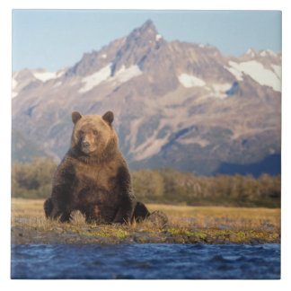 brown bear, Ursus arctos, grizzly bear, Ursus Tile