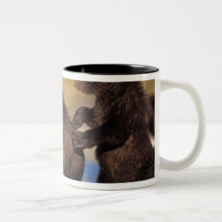 brown bear, Ursus arctos, grizzly bear, Ursus Two-Tone Coffee Mug