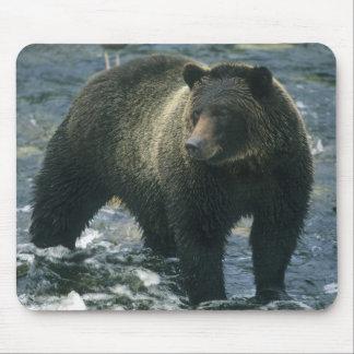 Brown Bear, Ursus arctos), hunting salmon, Mouse Pad