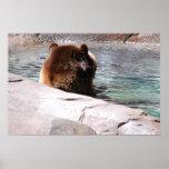 Brown Bears Print