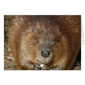 Brown Beaver Nibbles Food From Cute Little Paws Card