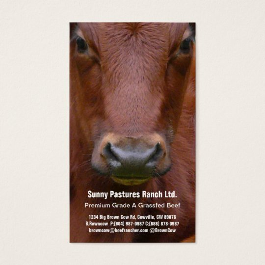 Brown Beef Steer Business Card