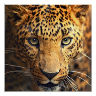 Brown Black Spotted Leopard Poster