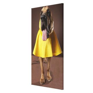 Brown bloodhound dog wearing yellow raincoat canvas print