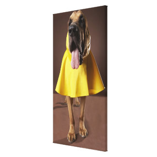 Brown bloodhound dog wearing yellow raincoat canvas print