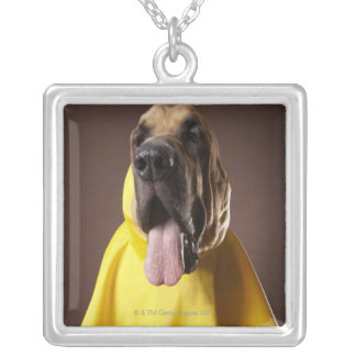 Brown bloodhound dog wearing yellow raincoat silver plated necklace