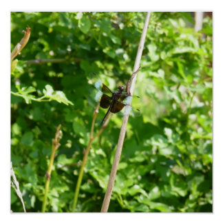 Brown Blue Dragonfly on Reed Posters