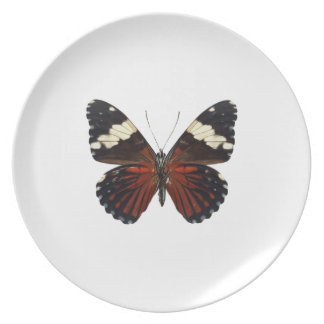 Brown butterfly on any color plate