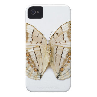 Brown Butterfly, overhead view iPhone 4 Case