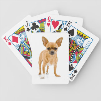 Brown Chihuahua Dog Playing Cards