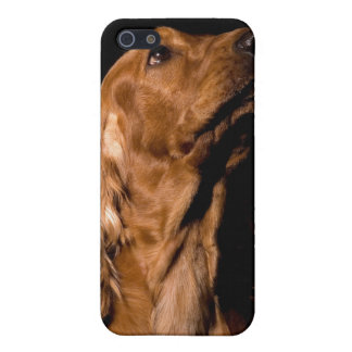 Brown Cocker Spaniel Dog iPhone4 Cover Case For iPhone 5