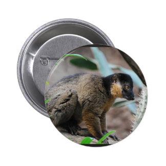 Brown Collared Lemur 6 Cm Round Badge