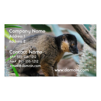 Brown Collared Lemur Pack Of Standard Business Cards