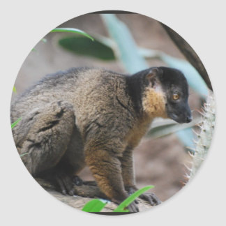 Brown Collared Lemur Stickers