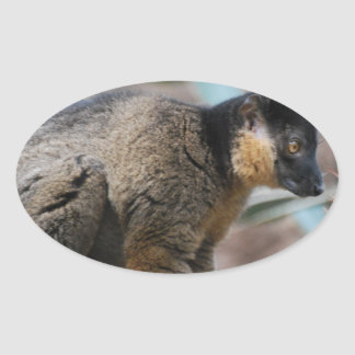 Brown Collared Lemur Oval Sticker