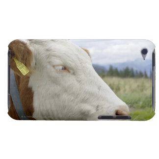 Brown cow with a sign in it?s ear on a feedlot, Case-Mate iPod touch case