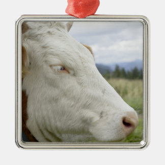 Brown cow with a sign in it?s ear on a feedlot, christmas ornament