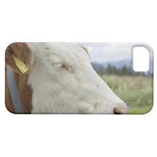 Brown cow with a sign in it?s ear on a feedlot, iPhone 5 case