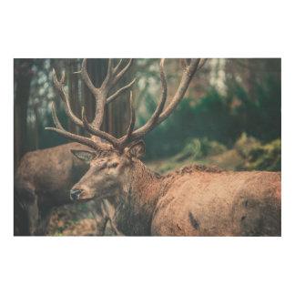 Brown Deer Wood Wall Art