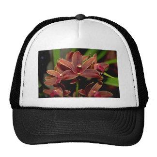 Brown Dendrobium flowers Hat