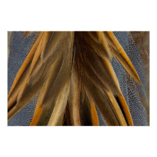 Brown Duck Feather Abstract Poster