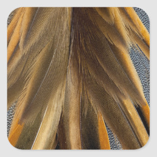 Brown Duck Feather Abstract Square Sticker