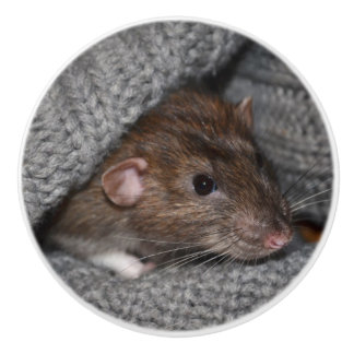Brown Dumbo Rat Dresser Knob