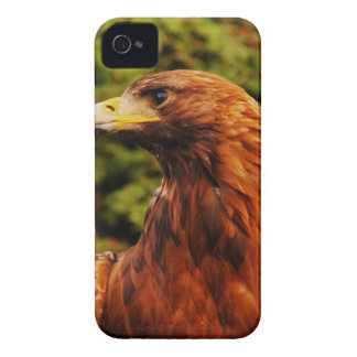 Brown Eagle Eye iPhone 4 Case