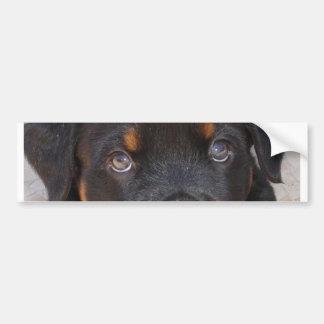 Brown Eyed Boy Bumper Sticker