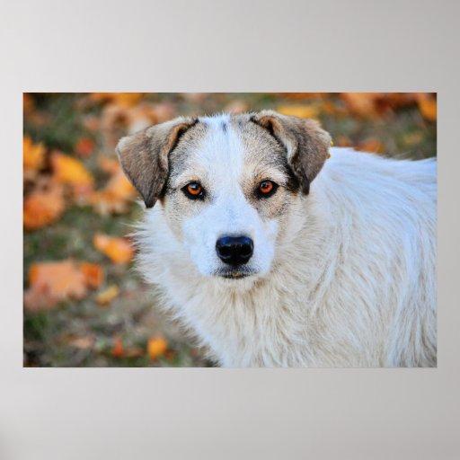 Brown eyed dog poster