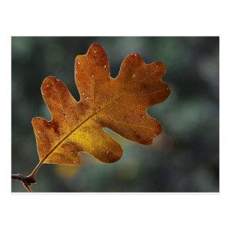 Brown Fall Leaf Postcard