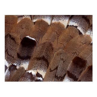 Brown Feather Design Postcard