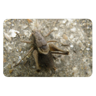 Brown Field Cricket Premium Magnet