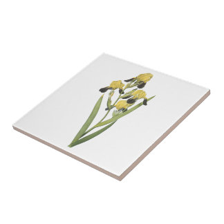 brown-flowered iris(Iris squalens) by Redouté Small Square Tile