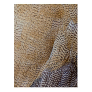 Brown Goose Feather Abstract Postcard