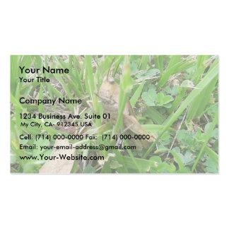 Brown Grass Hopper Hiding In Green Grass Business Card