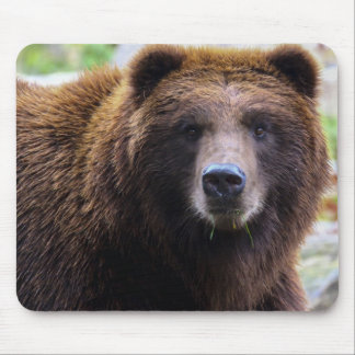 Brown Grizzly Bear Mousepad