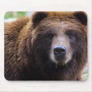 Brown Grizzly Bear Mouse Pads