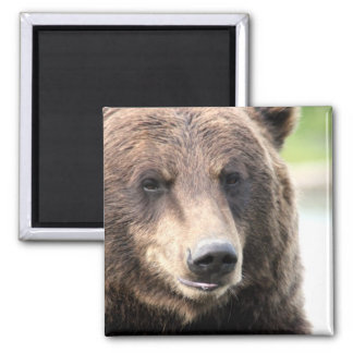 Brown Grizzly Bear Square Magnet
