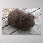 Brown Guinea Pig Poster