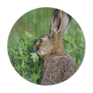 Brown Hare, Lepus europaeus, young eating, Cutting Board