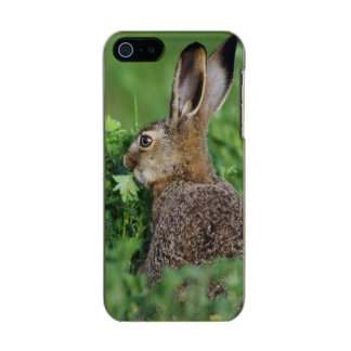 Brown Hare, Lepus europaeus, young eating, Incipio Feather® Shine iPhone 5 Case