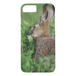 Brown Hare, Lepus europaeus, young eating, iPhone 8/7 Case