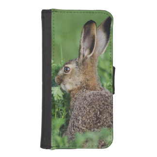 Brown Hare, Lepus europaeus, young eating, iPhone SE/5/5s Wallet Case