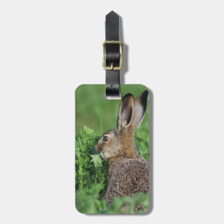 Brown Hare, Lepus europaeus, young eating, Luggage Tag