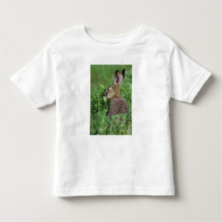 Brown Hare, Lepus europaeus, young eating, Toddler T-Shirt