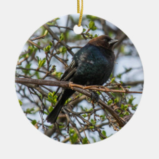Brown-headed Cowbird Christmas Ornament